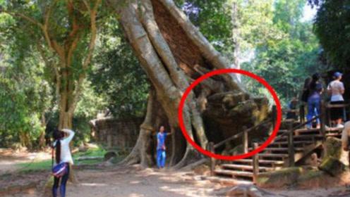 百年大树突然倒下,怀孕妻子当场身亡,丈夫砸开树根后毛骨悚然!