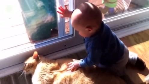 狗狗牌沙发垫是不是很舒服,宝宝真是太开心了,能借我也躺一下吗