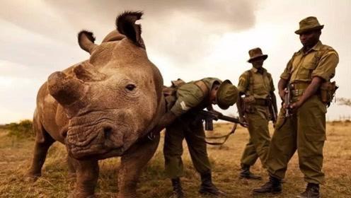 世界上最珍贵的动物,全球仅剩一只,24小时有武警持枪保护