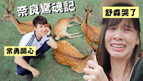 日本奈良游记,看到超级可爱的奈良小鹿,舒森哭了?