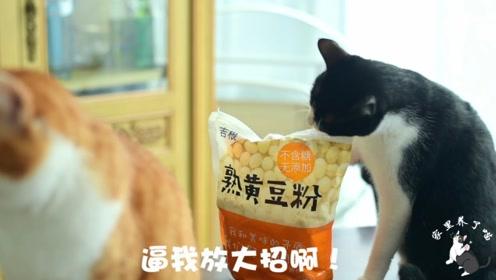 猫咪惩罚铲屎官睡懒觉,放出大招气哭主人:周末多睡会儿不行吗?