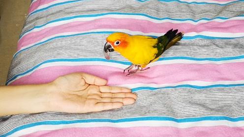 鹦鹉叼硬币,今天看来是很不开心的亚子,这是故意不好好干活吗?