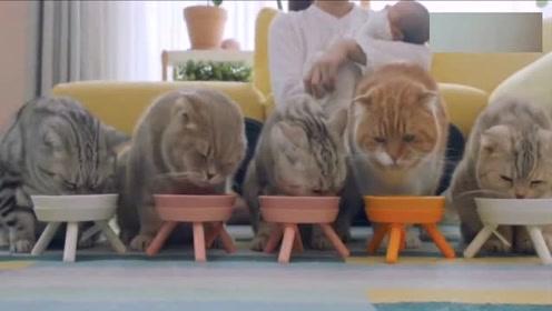 吃着碗里的,惦记着别人碗里的,你不胖谁胖