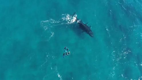 5名潜水员正在游泳,突然游过来两头鲸鱼,下一秒看了让人害怕