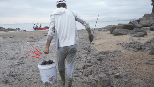 阿烽找到赶海宝地到处都是昂贵海胆,海螺拳头大,桶早装不下了