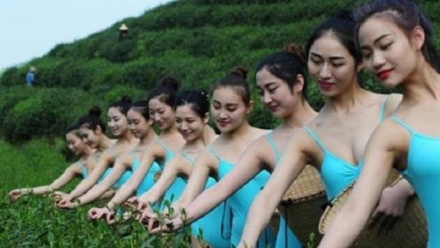 芭蕾美女穿泳衣采茶,衣着暴露被批恶意吸睛,茶主人道事先不知情