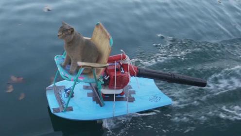 世界最帅喵星人!独自玩水上滑翔机,路过的美女看呆了