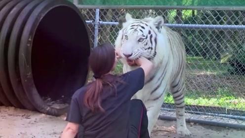 5年前女子好心救下小老虎,重逢时,老虎的反应让人直冒冷汗!