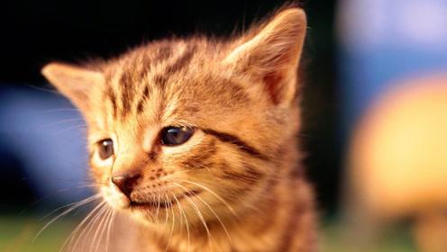 你是哪条街上的?霸气猫总裁的外交日常!对上眼就亲!