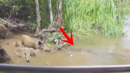 小伙钓鱼听到水中有异响,靠近一看被吓坏,这头鳄鱼太凶猛了