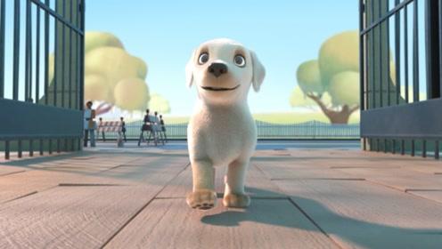 小狗想当导盲犬,但考试不合格,最后它用行动证明了自己的能力!