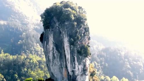 """贵州有一棵天然""""大白菜"""",100多米高,网友:这个猪不敢拱"""