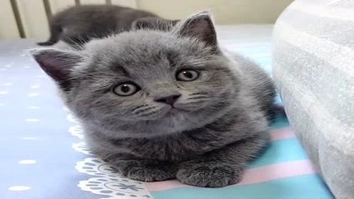 这猫也不知道看见了啥,一直重复一个动作,好像不太聪明的样子!