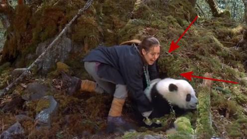 当年偷熊猫的美国人,转手卖了8000块,如今他怎么样了?