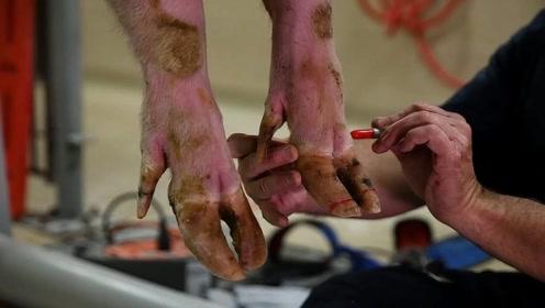 猪的指甲有多珍贵?养猪的人看完,估计都要后悔了