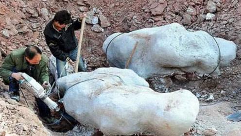 """河南现""""龙骨"""",6年挖出100吨骨头,拼起来后""""原形毕露""""!"""