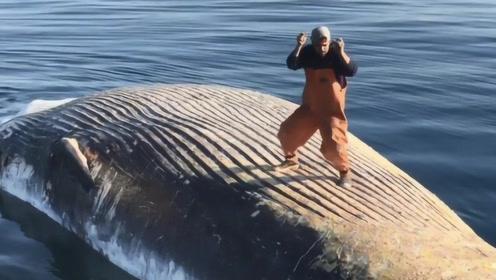 作死小伙在鲸鱼尸体上跳舞,看上去很炫酷,然而帅不过三秒