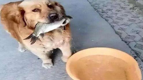 狗狗每天带回条大鱼,男子暗中跟踪发现不得了,这狗简直太厉害了