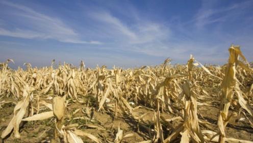 新墨西哥去年面临干旱,只能种些抗旱农作物,现美国也开始缺水!