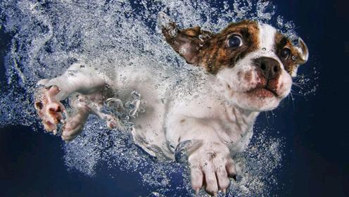 会游泳了不起吗?看把狗狗得意坏了!那些会游泳的狗狗!