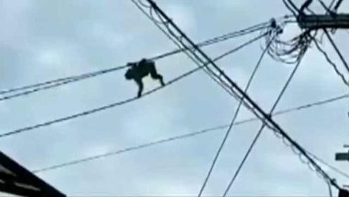 日本猴子频繁爬电线,还在楼间穿梭, 警察提醒注意安全