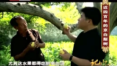 李然人没找见呢 摘下京白梨就开吃了结果被张大爷逮个正着!