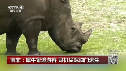 南非:犀牛紧追游客 司机猛踩油门逃生
