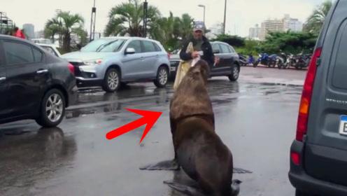 大街上突然跑来一只这家伙,对着人穷追不舍,男子吓得跪地求饶!
