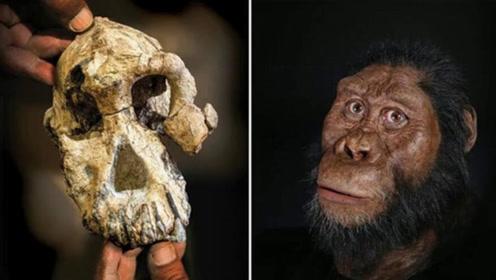 380万年前人类祖先长相复原:科学家发现古猿头骨并重建还原