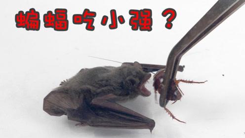 把一只蝙蝠和蟑螂关在封闭空间里,会发生什么?
