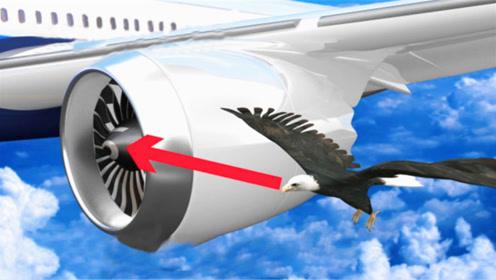 飞机撞到小鸟有多恐怖,威力堪比导弹,看完真是捏了一把冷汗!