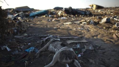 太可怕!比核泄漏更恐怖的埃博拉病毒,令整个非洲陷入了恐慌!