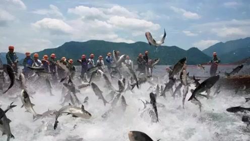 印尼一年一度的捕鱼节上百村民齐聚河边 这简直是要物种灭绝