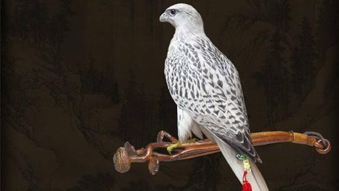 曾经的天空霸主万鹰之神如今沦落到成为二级保护动物