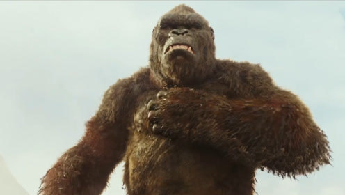 大猩猩为什么喜欢拍胸脯?难道只是显示它们的力量强大?