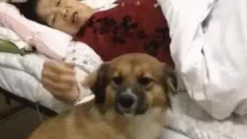 土狗偷偷去医院看望奶奶,不料被护士发现驱赶,它的反应让人泪目