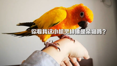 鸟类可以身体动却头不动?用自家鹦鹉试了试,它的表现让我吃鲸!