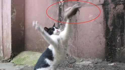 """猫遇上老鼠兴奋坏了,当场使出""""降龙十八掌"""",老鼠:给个痛快吧"""