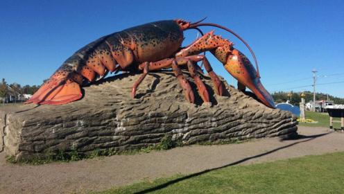 全球最大龙虾,1米多长,重达20公斤,申请完世界记录就死了!