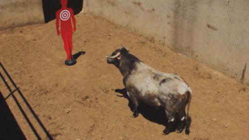 公牛只攻击穿红衣服的人?实验得到验证,结果有点意外