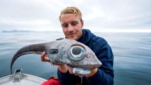 渔民在挪威捕获大眼怪鱼:长着鼠头龙尾,虽然丑但很好吃