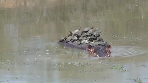 女子河边看到水中有怪象,掏出手机拍照,看清楚后丢掉手机