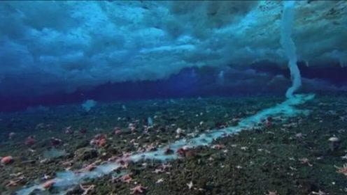 """海底最强""""杀手"""",死在它手里的生物,甚至不知自己是怎么死的"""