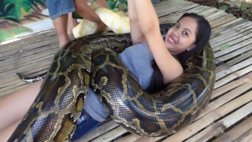 菲律宾最吓人的按摩,4条蟒蛇缠绕人身,出错就去见阎王爷!