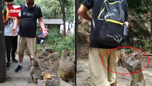公园猕猴抢劫路人食物、拉人裤子,一旁女子爆笑:太逗了