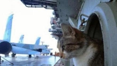 为什么航母上都要养一只猫?不为了抓老鼠,真实作用超乎想象