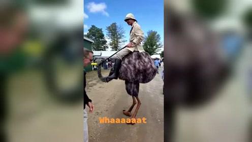 中国人骑马,外国人骑的是鸵鸟!这就是差别