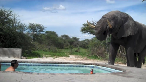 大象闯入院里喝水,喝完发现水里有人瞬间呆住:你们没尿尿吧