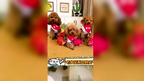 当妈的这么会偷懒,你说给三只狗狗拍照有多难?