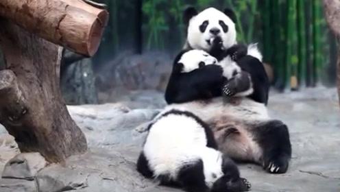 团子打架被欺负,熊猫妈妈将它抱在怀中,网友:这个妈,我来当!